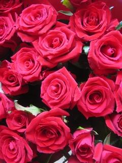 ピンク バラ 花束 誕生日プレゼント